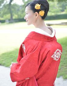 唐織紅鳳凰松皮花菱